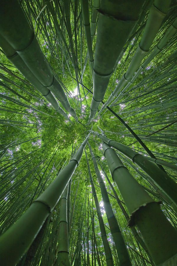 Bamboo -- Creating a nearby Forest -- grows wicked fast and has a million uses...not to mention it's aesthetically pleasing