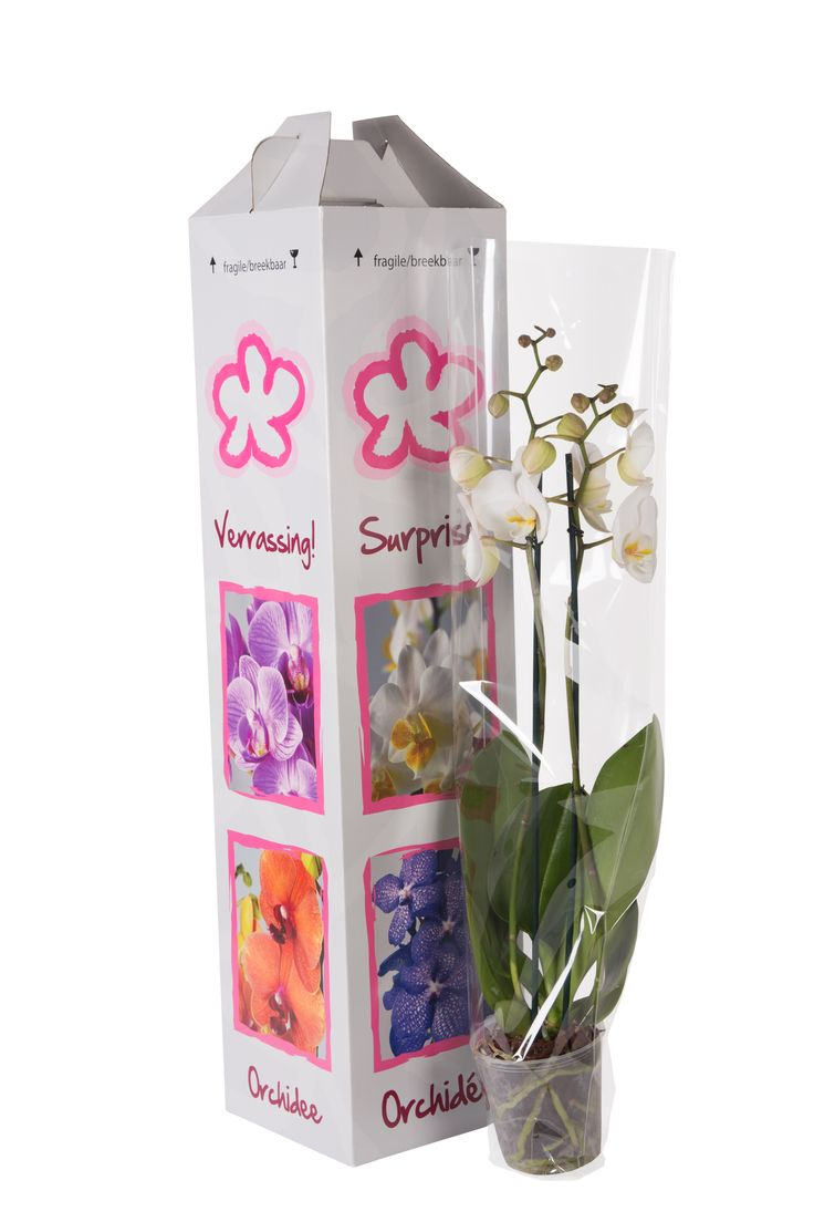 #orchid #potted #plants #packaging #surprisebox