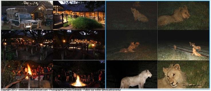 Addo area safari watching lions