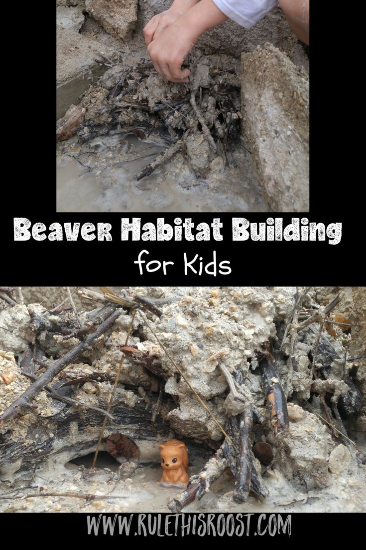 Beavers are fascinating animals!  Check out this #beaver #habitat made by #kids!