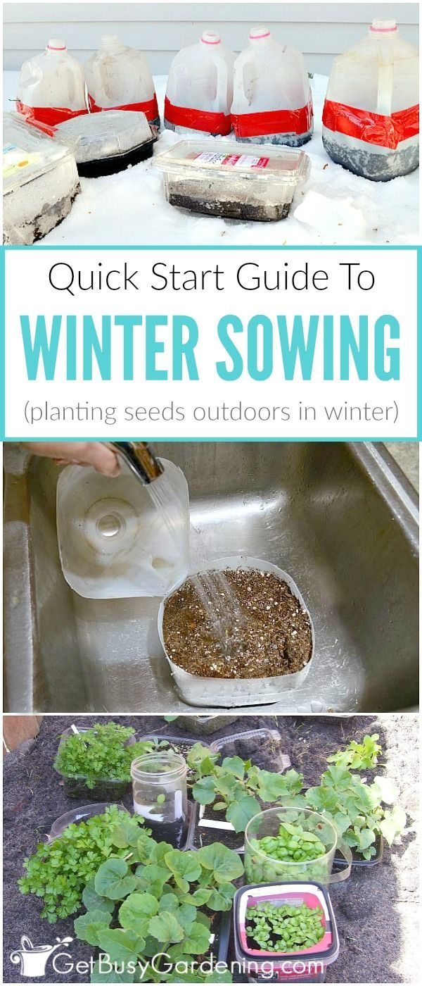 Have you heard of winter sowing yet? The winter sowing method is a way of planting seeds outside during the winter in milk jug greenhouses, and the seeds will naturally grow in the spring. If you've been wanting to learn how to winter sow seeds, here's your quick-start guide to winter sowing!