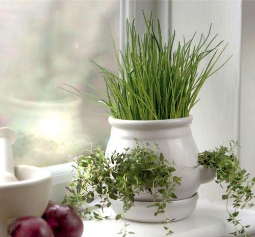 186 best INDOOR POTS images on Pinterest | Plants, Pots and Home