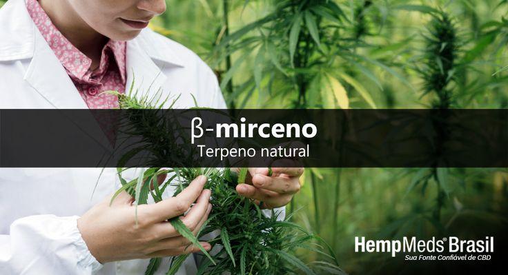 O Mirceno: precursor na formação de outros terpenos  Os terpenos são fitoquímicos responsáveis pelo sabor e aroma das plantas, podendo ser utilizados de várias formas, já que interagem com uma série de enzimas e receptores celulares. O mirceno é um destes terpenos, encontrado naturalmente em plantas do gênero Cannabis, incluindo o cânhamo.  Ao consumir um óleo de cânhamo integral seu organismo absorve muito mais do que apenas o CBD ou canabidiol....