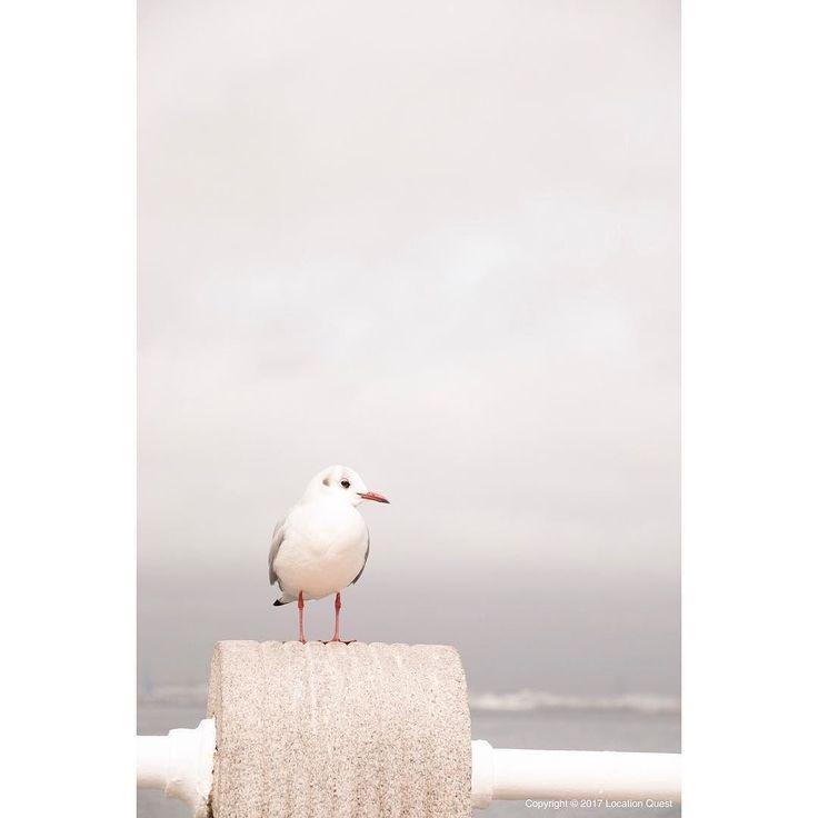山下公園にまったりしてる表情のカモメがいた... なんか上の空きスペースにセリフとか出て来そうだね  #photooftheday #picoftheday #webstagram  #instagood #follow #photo #japan #lightroom #igers #igersjp #canon #canon_photos #yokohama #gull #横浜 #山下公園 #カモメ #東京カメラ部 #ファインダー越しの私の世界