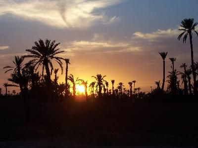Maroc, la Palmeraie