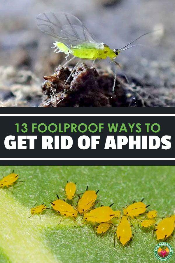 b9728dff0b021e6beb6c85d8022390be - How To Get Rid Of Grasshoppers On My Plants