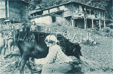 Picture No 10279844 Date circa 1910s Description Trabzon, Turkey - Country Life Details  Milking the cow and a general view of rural life and housing in the country close to Trabzon on the Black Sea coast in north-eastern Turkey. The capital of Trabzon Province. Trabzon was located on the historic silk road route and during the Ottoman period, because of the importance of its port, Trabzon became a focal point of trade to Iran, India and the Caucasus. Credit Mary Evans…