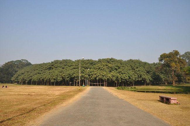 """The Great Banyan Tree là cái tên mà người dân địa phương dùng để gọi """"cụ"""" cây khổng lồ với kích thước đáng ngạc nhiên.    Nhìn từ xa, không ai nghĩ đây là duy nhất một cái cây.   Nằm trong khuôn viên khu vườn Acharya Jagadish Chandra Bose Indian Botanic Garden tại Howrah, gần thành...  http://cogiao.us/2017/02/08/kinh-ngac-cay-da-khong-lo-co-tan-lan-rong-ngang-voi-ca-mot-khu-rung/"""