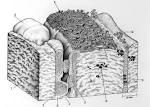 Stromatolite/thrombolite reefs