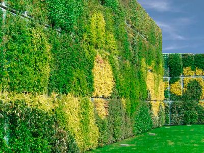 Vertiss - Grüne Wand oder Vertikaler Garten, originelle und attraktive Varianten der Wandbegrünung