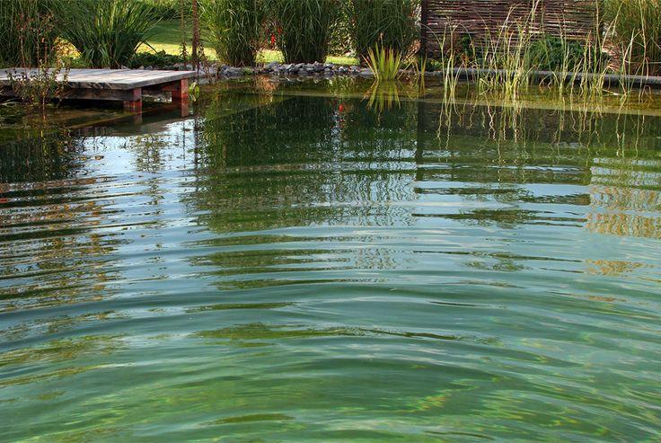 Projekt 1 Schwimmteich Naturpool Gartenteich