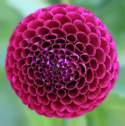 15 Plants That Teach Us Sacred Geometry : Waking Times