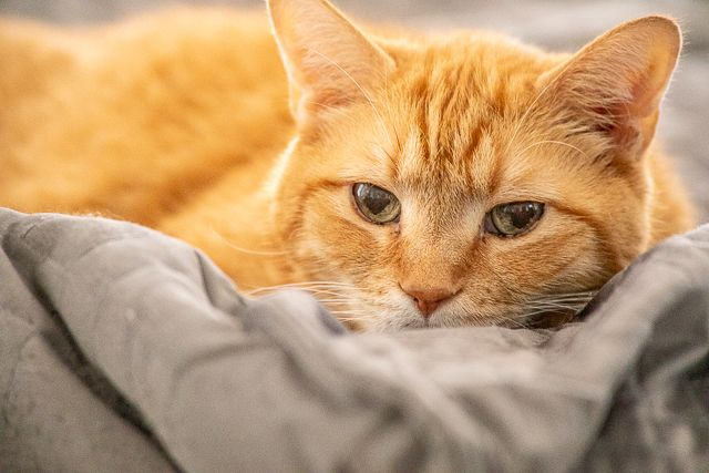 Meow Monday Plain Chicken With Images Pet Breeds Crazy Cats