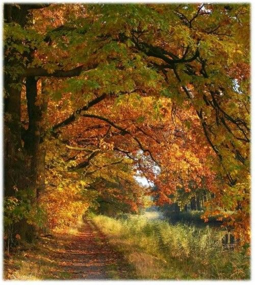 tassels:    Klarenbeek - Netherlands