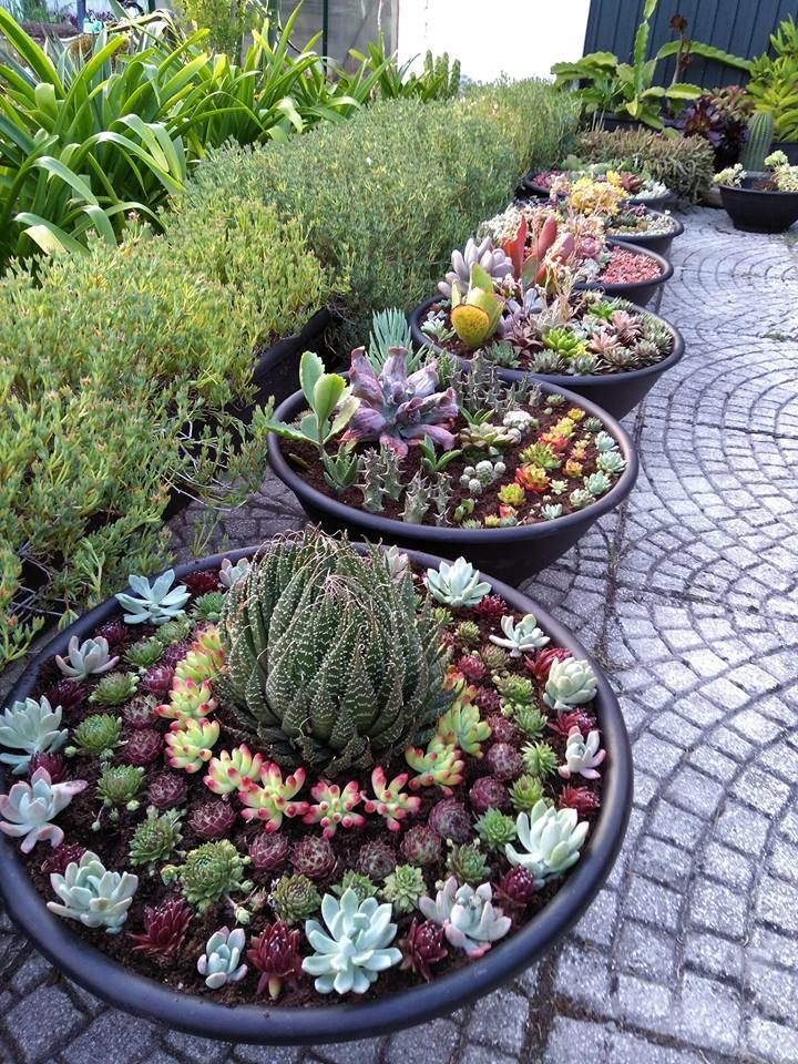 potted succulent gardens