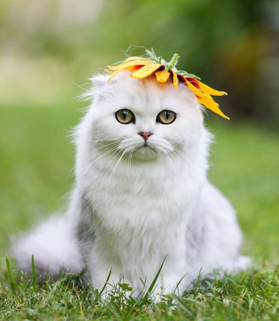 Oh my, a very cute kitty with a flower on her head! What more could you ask for?