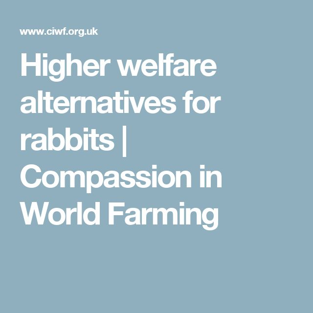 Higher welfare alternatives for rabbits | Compassion in World Farming