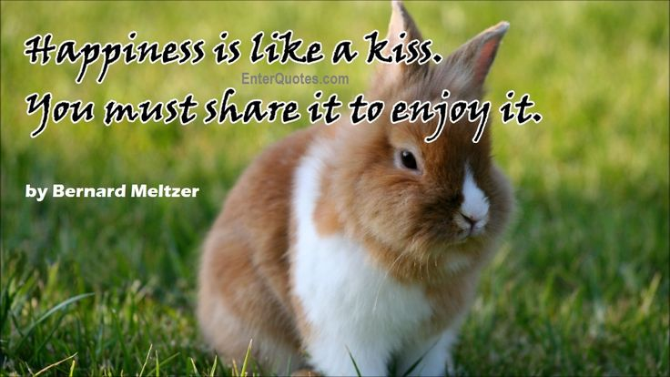 Bernard Meltzer Quote - Happiness is like... » Enter Quotes