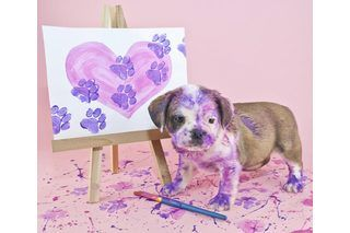 How to Make Your Own Pet-Safe Paint (4 Steps) | eHow