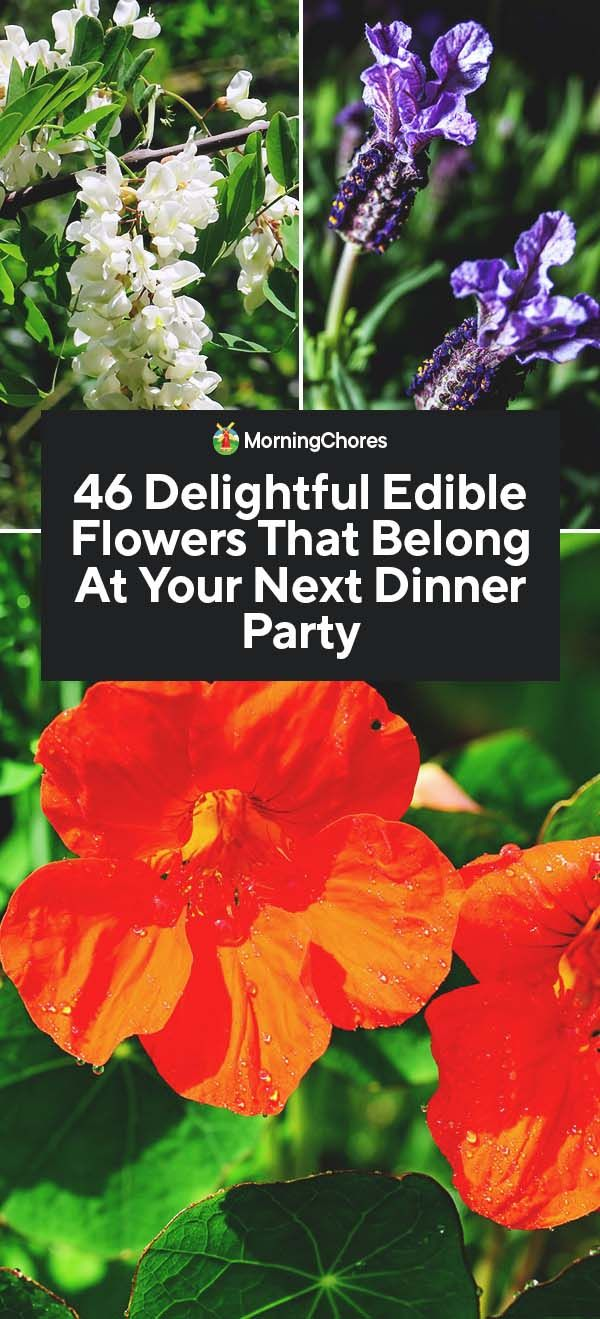 46 Delightful Edible Flowers That Belong At Your Next Dinner Party Edible Flower Garden Edible Flowers Beautiful Flowers Garden