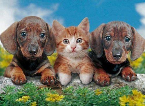 Zvířata - Bison Zvířata - roztomilá štěňátka, zvířecí - hezký pes a také velmi roztomilý příliš :-)), Zvířata - roztomilý štěňata, zvířata - Deer, Zvířata - Ježek, dvě pes s kotětem - velmi sladké, Zvířata - leopard málo, Diesel Black kočičí oči, krásná bílé kotě - jpiros blog - Zvířata, Andělé, víly, animace, GIF, Den matek fotografie, Donald Zolan Obrazy zdraví, kuriozit, Esoteric, vepsaný: večer, noc, napsáno: týden, víkend, s titulky: ranní , nicméně, s titulky: nápisy, Delikatesy…