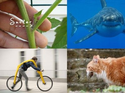 Most Popular Articles of August: Wacky Pedal-Less Bike, Killer Cats, and More
