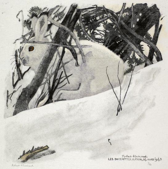 Lièvre blanc dans le fourré , Robert HAINARD Gravures Gravures Gravure sur bois n° 396 Obs. 14.3.1943, Les Bottenittes, Gryon (Vaud, Suisse) white hare