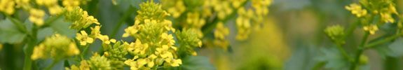 Coloradogardening.com Questions & Answers for Shrubs has very useful information about plant choices and care