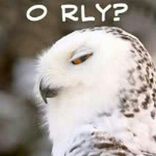 funny owl owls pinterest funny owl and funny owls