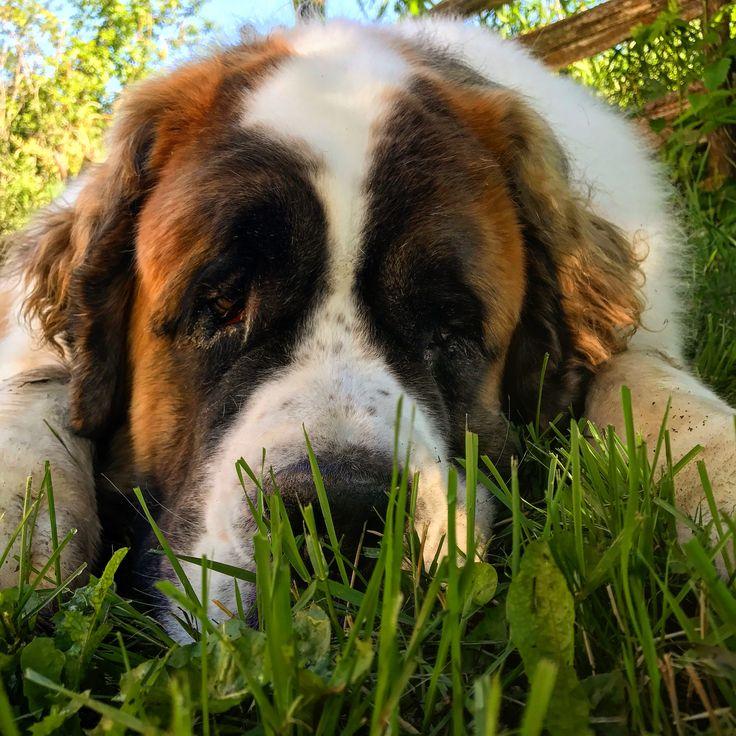 Buddha! ❤️ BEST DOG EVER!