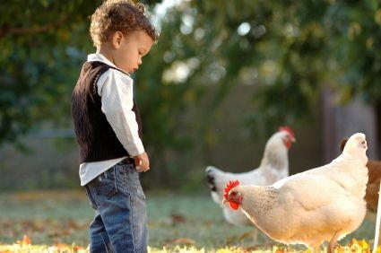 Farm Stays near Brisbane | Recommended - Brisbane Kids