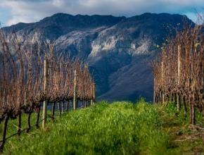 Cabernet Sauvignon vineyards and mountain views.