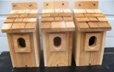 Building bird houses is fun, especially when you build some with your family. Learn how to build bluebird bird houses, a great afternoon project.