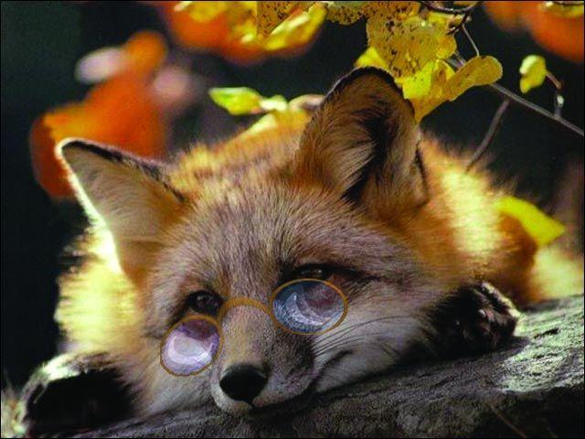 Смешные фотографии животных в очках