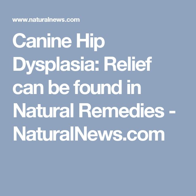 Canine Hip Dysplasia: Relief can be found in Natural Remedies - NaturalNews.com