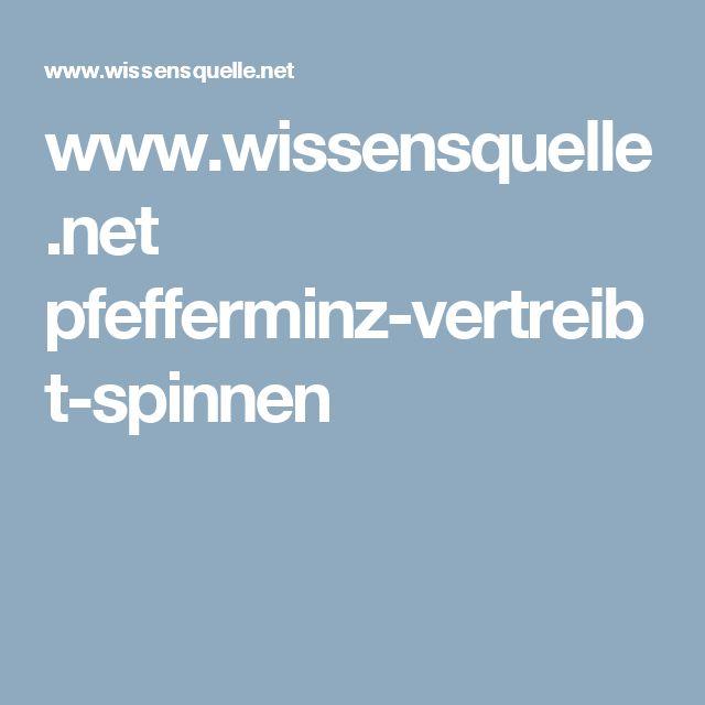 www.wissensquelle.net pfefferminz-vertreibt-spinnen