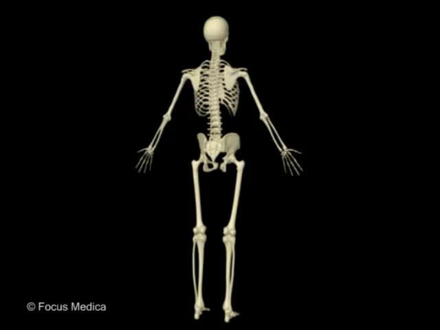 Atlas Infantil Animado: Sistema Esqueletico y Muscular (Español) on Vimeo