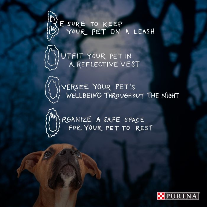 Halloween can be scary so be sure your dog stays safe with these Halloween safety tips!