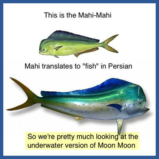 "Pahahahaha! Mahi Mahi is fish fish. """"Who fucking invited Moon Moon?"""