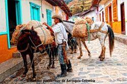 ESTAMPAS PUEBLERINAS DE COLOMBIA ......... .(Arrieros paisas y sus mulas complemento de su trabajo diario) .......    http://www.chispaisas.info/estampas.htm