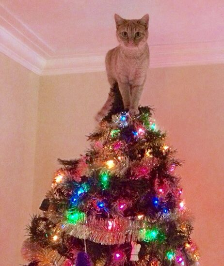 Cat Angel Christmas Tree Topper: 241 Best Images About CHRISTMAS ANIMALS On Pinterest