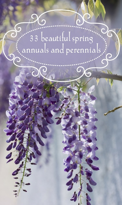 Ever wonder what's in season? Here's a list of 33 Beautiful Spring Annuals and Perennials to help you out!
