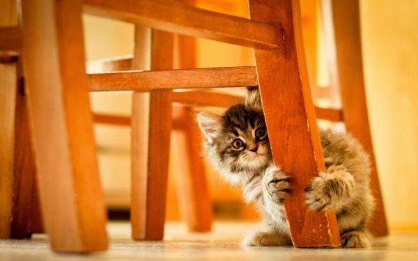 Animals Cats Kittens Babies Chair Paws Wallpaper Kitten Wallpaper Cat Hiding Cute Cats
