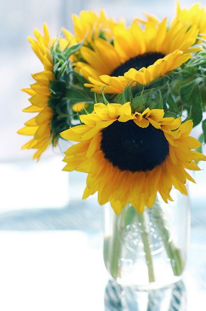 Tournesol, French for sunflower - the flower that follows the sun.