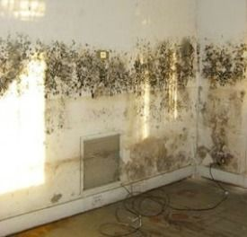 Mold on Wall - How to Remove Mold with Essential Oils