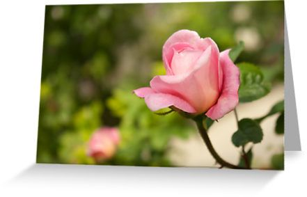 Smell the rose by steppeland.  Price: €1.96 - Check discounts!