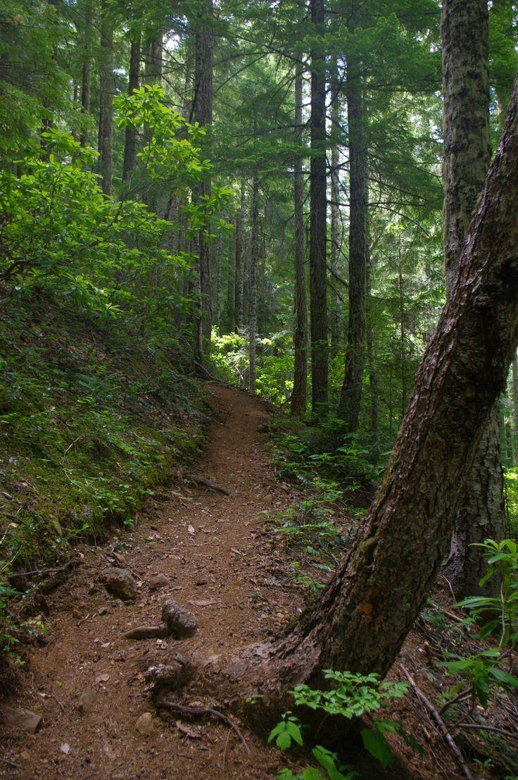 Summer Afternoon hiking up the trail in the Douglas fir ...  Douglas Fir Forest