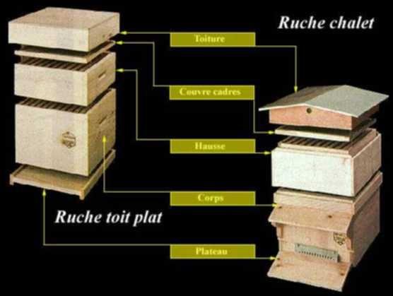 plan ruches