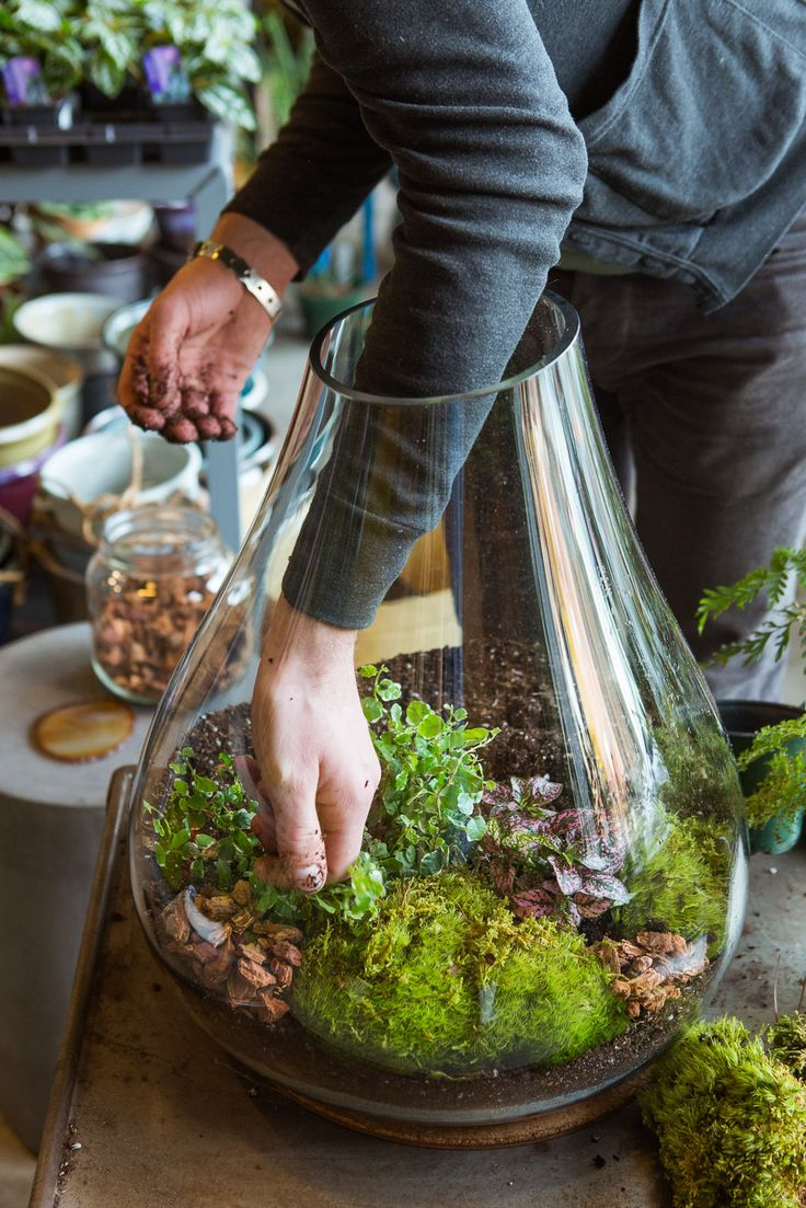 How To Plant an Indoor Terrarium