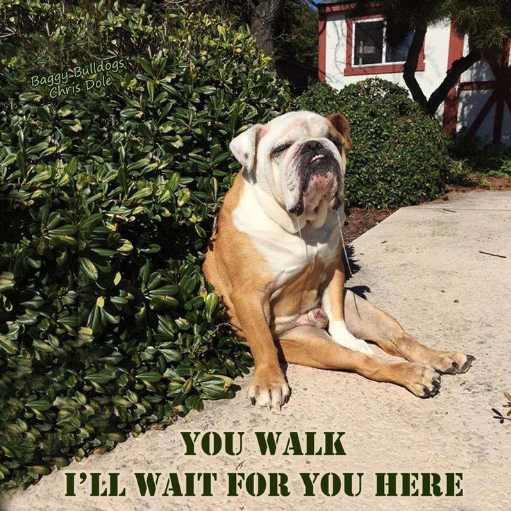 Discover The Calm Bulldog Dog Grooming #bulldogswa…